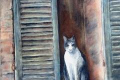 kat-in-venster